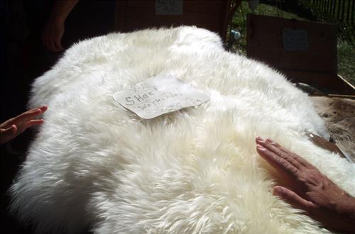 Nên mua Chăn lông cừu tự nhiên hay chăn lông cừu tổng hợp so sánh chất lượng tốt sấu